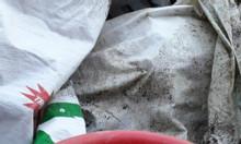 Bán bột cá, xác mắm làm phân bón hữu cơ