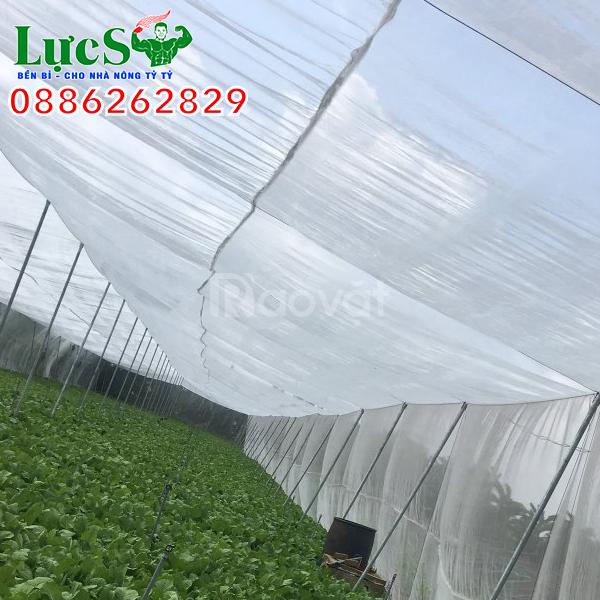 Lưới chắn côn trùng giá rẻ, nhà lưới trồng rau công nghệ cao