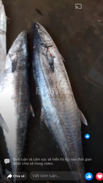 Rau, cá, mực, tôm Quảng Ngãi mới về đây