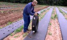 So sánh lưới mùng và màng phủ nông nghiệp màng phủ nylon