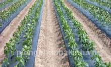 Màng ni lông dùng trong nông nghiệp