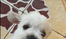 Cún dễ thương cần tìm chủ