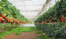 Nhà kính trồng rau, nhà kính trồng hoa, nhà kính phơi nông sản