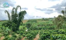 Bán thửa đất tại trung tâm TP. Bảo Lộc, phường Lộc Tiến 13.100m2