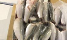 Cần bán cá nục đông lạnh